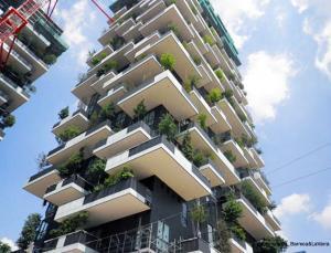floresta vertical