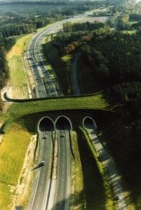 pontes para animais