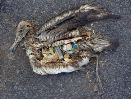 lixo destino