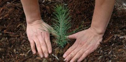 João Pessoa 42 mil árvores