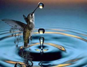 beija flor e água