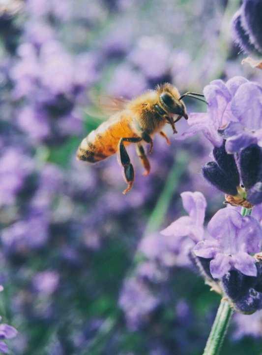 abelhas-insubstituiveis3