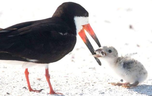 pássaro filhote bituca