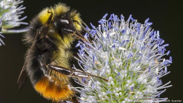 abelhas imprescindíveis