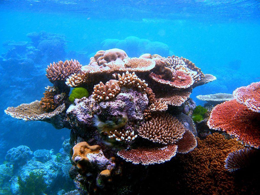 coral-e1583254903841